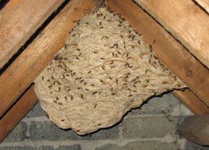 Voorbeeld wespennest bestrijden