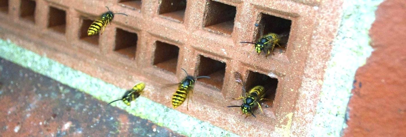 Wespen spouwmuur verwijderen